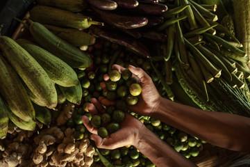 Légumes issus de la permaculture