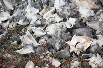 Shells caribbean sea coast tropical Bonaire island