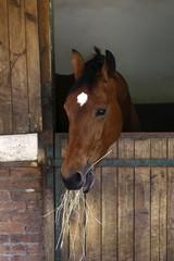 feeding horse, animals