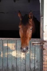 horse farm,animals
