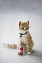 Cat wearing medical cone collar