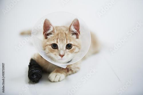 hyperthyroidism symptoms cats