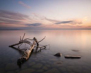 Driftwood in lake