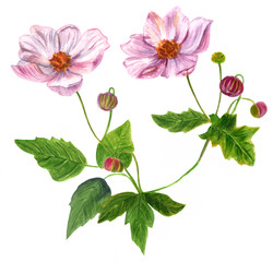 Watercolor strawberry flowers with green leaves and new buds