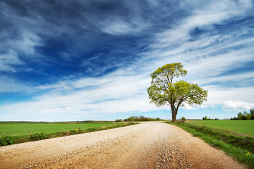 Wall Mural - Beautiful lonely tree in spring near gravel road