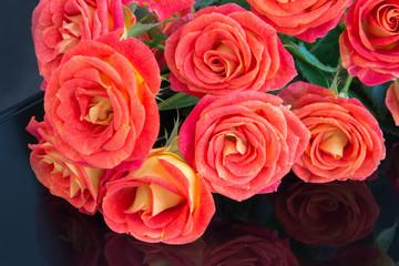 Soft full blown red-orange roses on black background