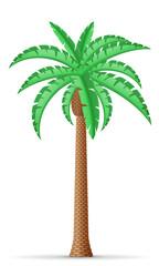 palm tree vector illustration