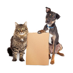 Fototapete - Dog and Cat With Blank Cardboard Sign