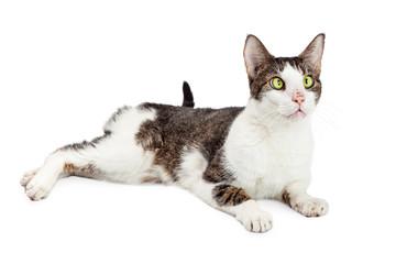 Funny Cross-eyed Cat Over White