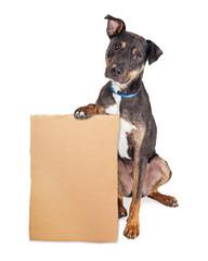 Wall Mural - Sad Dog Holding Blank Cardboard Sign