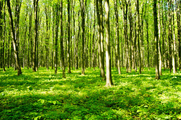 Papiers peints Forets forest green