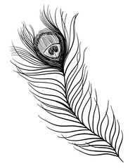 Peacock feather. Black and white illustration. Tattoo