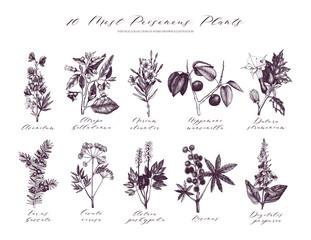 Vector Most Poisonous Plants Collection. Botanical hand drawn illustration. Vintage noxious plants sketch set