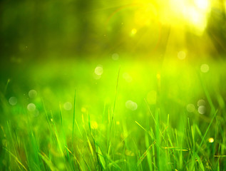Wall Mural - Nature blurred background. Green grass in spring park with sun flares backdrop