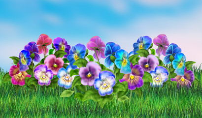 Pansy Spring flowers. Pansy Field Landscape. Viola tricolor with grass and light blue sky. Digital Illustration. For Art, Print, Web design.