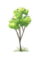 Water color tree illustration