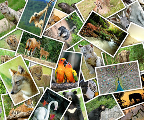 Pictures of animals pile on the table
