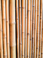 Bamboo Fence in the Vernacular Museum