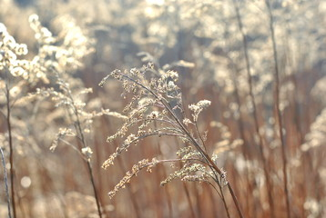 Dry plants with the sunlight