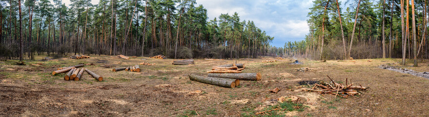 Cutting of trees. Ecology.Panoramic photography