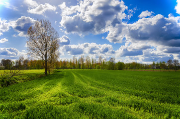 Spring landscape. Green field under a blue sky with clouds.