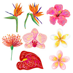 Exotic tropical flowers collection. Set of hand drawn tropical flowers. Vector illustration