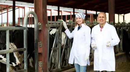 Farm employees standing near milking herd