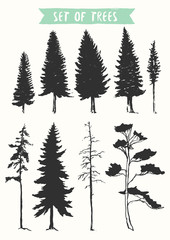 Hand drawn vector silhouette pine and fir trees