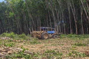Deforestation environmental destruction