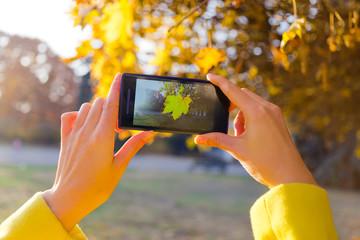girl photographed golden maple leaf on a smartphone camera