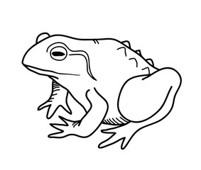 Frog Doodle, a hand drawn vector doodle illustration of a frog.