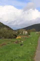 Grünes Tal im Spessart in Bayern