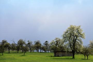 Dunkle Wolken vor dem Regen über Apfelbäumen