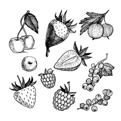 Hand-drawn vector illustration. Collection of berries. Isolated