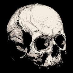 Hand panache of a human skull