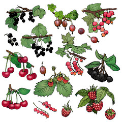 A set of various color realistic berries: red and black currant, cherry, gooseberry, raspberry, strawberry, aronia. Vector illustration on  white background.
