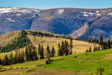 snowy tops of carpathians in spring