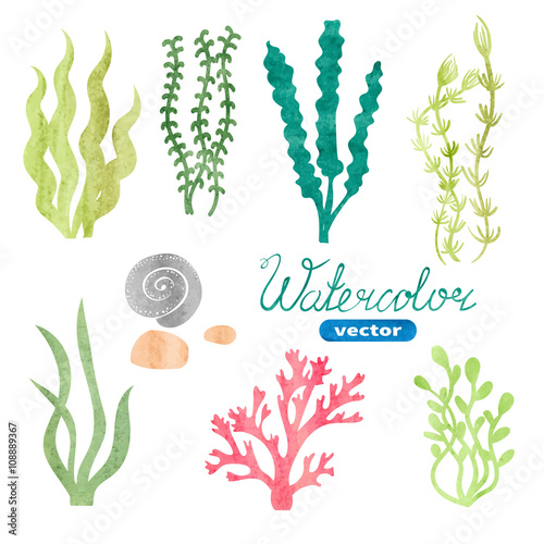 """""""Set of watercolor seaweed, corals and stones isolated on"""