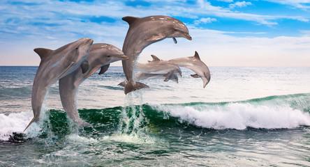 six dolphins jumps ocean