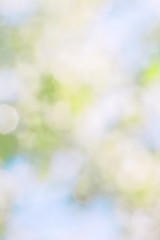 Blurred spring background from blurred blooming garden