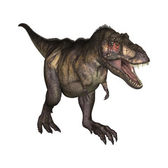 3D Illustration Tyrannosaurus on White