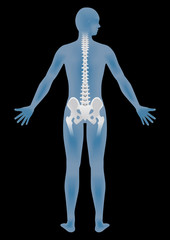 human body silhouette and backbone, chiropractic image, vector illustration