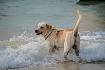 Dog enjoying the sun at the beach