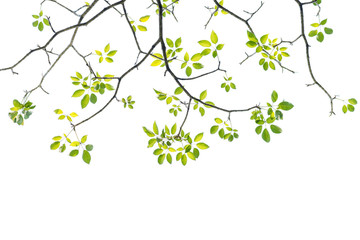 Wall Mural - green leave on white background