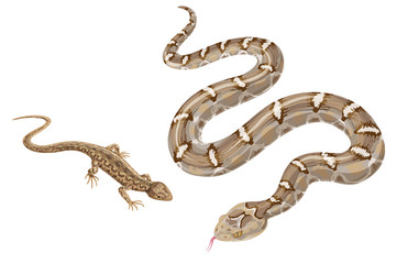Image of  snake and   lizard isolated on white.