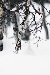 White bird in snow