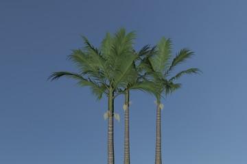 Palm Tree Alexander Alexanderpalme Archontophoenix alexandrae. Nice 3D Rendering