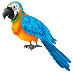 Parrot with yellow and blue feather