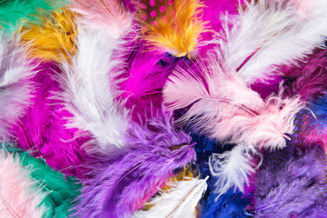 Colored different Feathers background pattern.