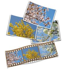 Frühling, Film, Blüten, Fotografie